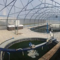 AlgaeBioGas: Algal wastewater treatment technologies and biomass production