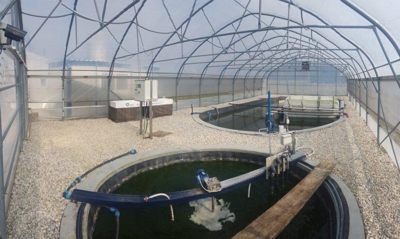 AlgaeBioGas: Algal wastewater treatment technologies and biomass production